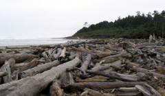washington-coast-driftwood