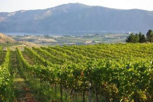 Atam Winery vineyards overlooking Lake Chelan