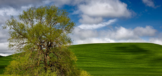 Hills in the Palouse Washington State