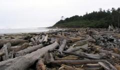 Washington State Coastline Driftwood
