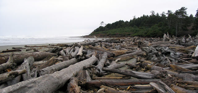 Washington State Coastline Driftwood
